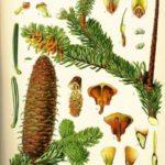 virtualni-botanicki-vrt